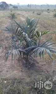 Agricultural Scientist | Farming & Veterinary CVs for sale in Oyo State, Ogbomosho North