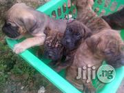 Top Quality Boerboel Puppies Available For Sale | Dogs & Puppies for sale in Lagos State, Ikorodu