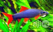 Aquarium Fish And Accessories | Fish for sale in Abuja (FCT) State, Wuse II