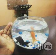 Fish Bowk Aquarium | Fish for sale in Lagos State, Amuwo-Odofin