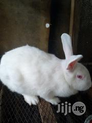 Rabbits In Portharcourt Rivers State For Sale | Livestock & Poultry for sale in Rivers State, Port-Harcourt