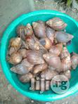 Snail For Sale | Other Animals for sale in Ikotun/Igando, Lagos State, Nigeria