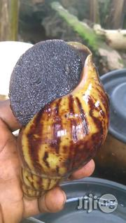 Snail For Sale   Other Animals for sale in Ogun State, Ado-Odo/Ota