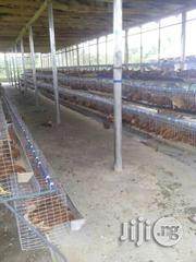 Transporting And Transferring Of Birds, Eggs, Turkeys Etc. | Logistics Services for sale in Oyo State, Ibadan