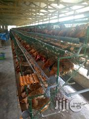 Hopico Nigeria Limited Cage | Farm Machinery & Equipment for sale in Abuja (FCT) State, Gwarinpa