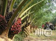 Palm Oil Farm Production | Feeds, Supplements & Seeds for sale in Edo State, Okada