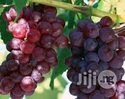 Red Grape Seedlings | Feeds, Supplements & Seeds for sale in Plateau State, Jos