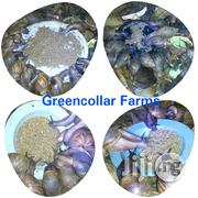Organic Snail Feed | Feeds, Supplements & Seeds for sale in Ogun State, Ado-Odo/Ota