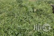 Half Plot of Land for Sale at Cele Village Iyana Ipaja Lagos | Land & Plots For Sale for sale in Lagos State, Alimosho