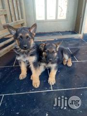 German Shepard | Dogs & Puppies for sale in Delta State, Isoko