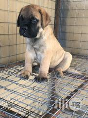 Full Breed Bull Mastiff Puppies   Dogs & Puppies for sale in Lagos State, Ikeja