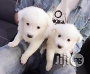 Snow White Samoyed Puppies | Dogs & Puppies for sale in Lagos State, Shomolu
