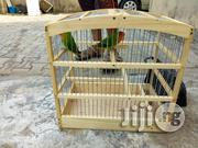 Pair Love Parrot For Sale | Birds for sale in Lagos State, Lagos Mainland