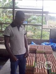 Poultry Farm Manager | Farming & Veterinary CVs for sale in Lagos State