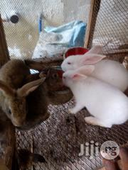 Rabbit For Sale | Livestock & Poultry for sale in Rivers State, Port-Harcourt