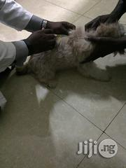 Your Professional Vet DR | Pet Services for sale in Lagos State, Lagos Island