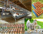 Hopico Global Enterprices | Livestock & Poultry for sale in Lagos State, Alimosho