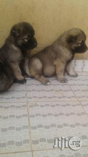 Mountain Caucasian Shepherd Puppies | Dogs & Puppies for sale in Lagos State, Lekki Phase 2