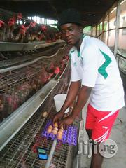 Mr Lawal Adebayo | Farming & Veterinary CVs for sale in Lagos State, Lagos Mainland