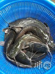 Fresh Barbecued Smoked Grit& Stone Free Tasty Hygienic Smoked Catfish   Livestock & Poultry for sale in Oyo State, Akinyele