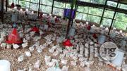 Broiler Production And Processing Consultant | Livestock & Poultry for sale in Ogun State, Ado-Odo/Ota