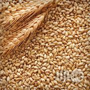 Barley Seeds | Feeds, Supplements & Seeds for sale in Lagos State, Lagos Mainland