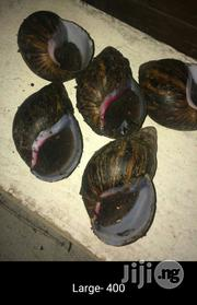 Snails For Sale Shelled And Unshelled Available | Other Animals for sale in Abuja (FCT) State, Gwagwalada