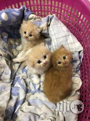 Persians Kittens | Cats & Kittens for sale in Lagos State, Lekki Phase 1