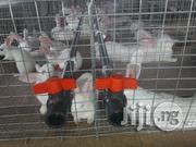 Pure Newzealand And Hyla | Livestock & Poultry for sale in Lagos State, Ikeja