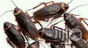 Fumigation And Pest Control   Pet Services for sale in Lagos State, Ikoyi