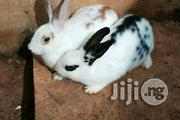 Crossed Breeds Of All Rabbits | Livestock & Poultry for sale in Ondo State, Akure