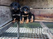 Super Boxhead Rottweiler M/F | Dogs & Puppies for sale in Lagos State, Ikorodu