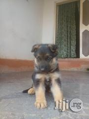 German Shepherd Puppies - Giant Breed | Dogs & Puppies for sale in Lagos State, Ikotun/Igando