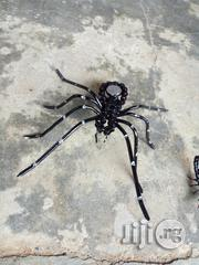 Red And Bleack Spiders | Home Accessories for sale in Lagos State, Ajah
