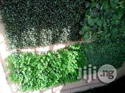 Wall Flowers | Landscaping & Gardening Services for sale in Lagos State, Ikeja