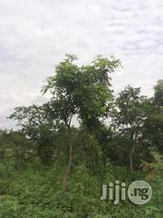 Very Fertile And Quality 600 Acres Of Land For Lease At Cheap Rate At Iseyin   Land & Plots For Sale for sale in Oyo State