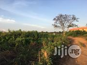 45 Acres Palm Tree at Lagun Area Along Iwo/Ibadan Road | Land & Plots For Sale for sale in Oyo State, Egbeda