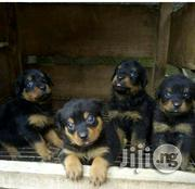 Baby Female Purebred Rottweiler | Dogs & Puppies for sale in Ogun State, Sagamu