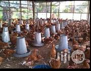 Healthy Point Of Lay Birds For Sale | Livestock & Poultry for sale in Oyo State, Oyo