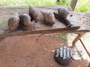 Snails Farming (Consultancy Services And Training) | Other Animals for sale in Abuja (FCT) State, Kubwa
