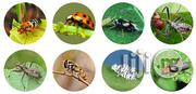 Organic And Natural Pest Control | Cleaning Services for sale in Abuja (FCT) State, Garki I