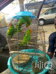 Parrot For Sale | Birds for sale in Abuja (FCT) State, Gudu