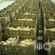 Quality Day Old Broiler   Livestock & Poultry for sale in Lagos State, Agege