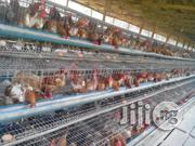 Poultry Products. | Livestock & Poultry for sale in Lagos State, Surulere