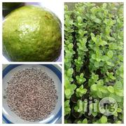 Hybrid Jumbo Guava | Garden for sale in Oyo State, Egbeda