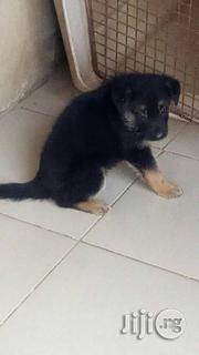 German Shepards For Sale | Dogs & Puppies for sale in Lagos State, Lagos Mainland