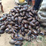 SNAILS (Giant African Land Snails) | Other Animals for sale in Abuja (FCT) State, Nyanya