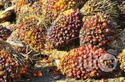 Palm Kernel Oil | Feeds, Supplements & Seeds for sale in Oyo State, Ibadan