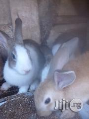 Winner Rabbit | Livestock & Poultry for sale in Oyo State, Ido