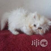 Imported Persian Kitten | Cats & Kittens for sale in Lagos State, Lekki Phase 1